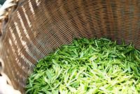 Встряхивание чайного листа в корзинах