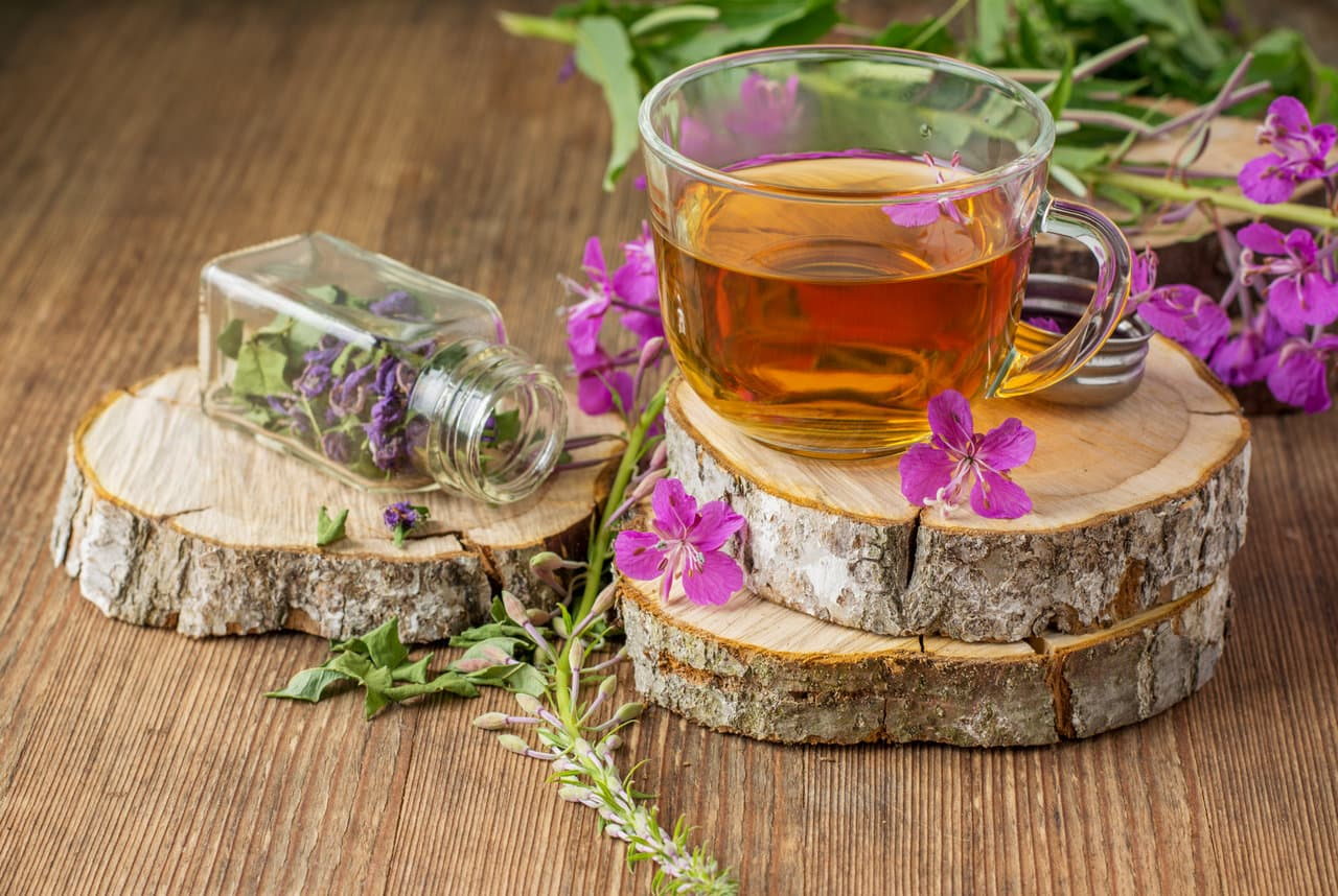трава иван чай лечебные свойства и противопоказания