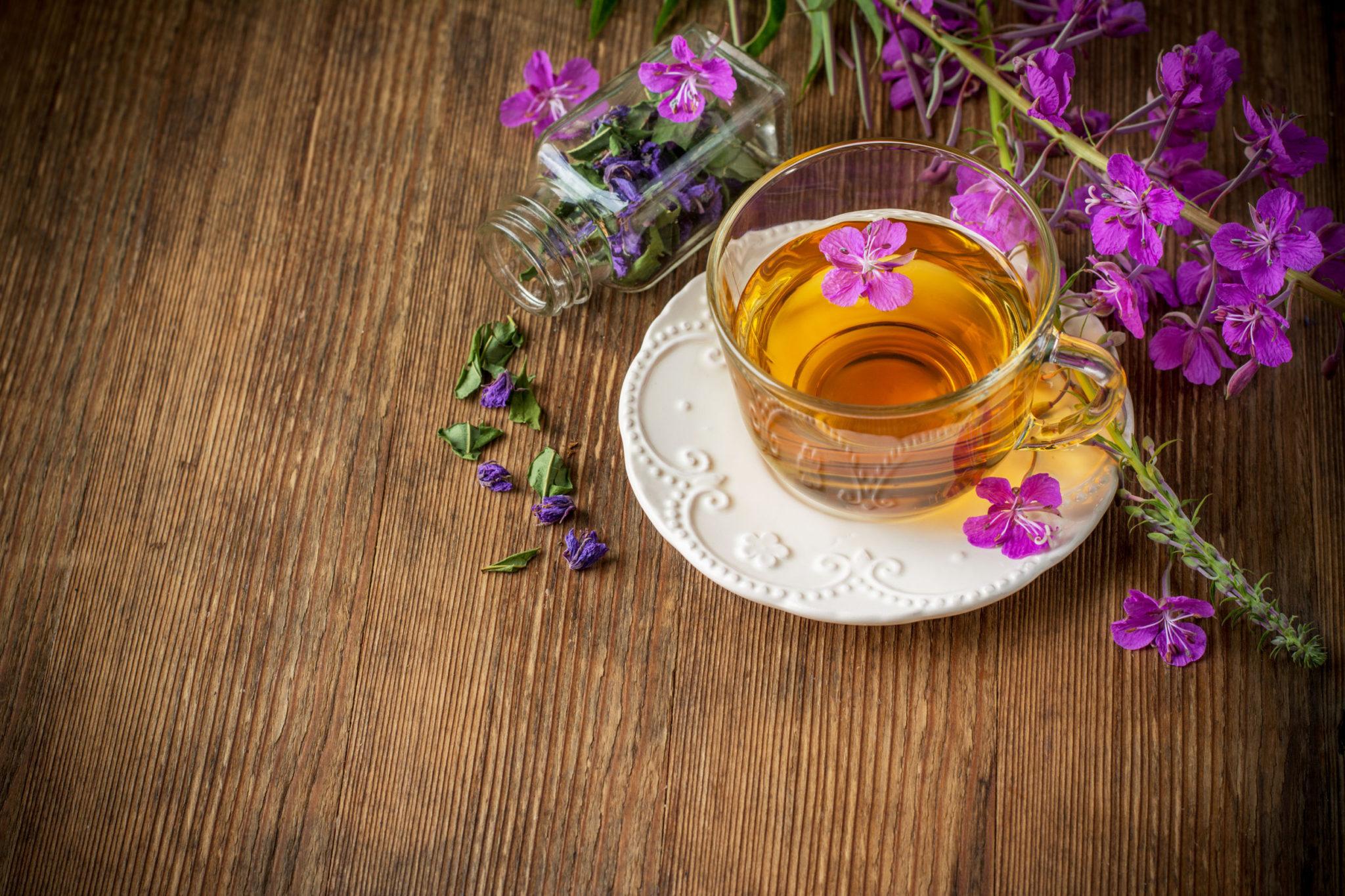 полезные свойства травы иван чая